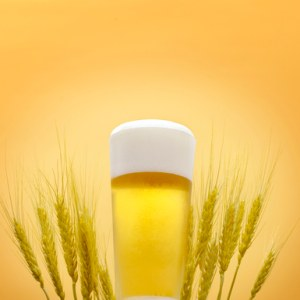 Beer in glass and barley