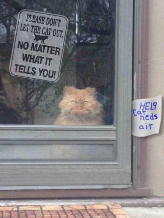 Dont Let Cat Out