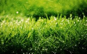 grass-green-rain-2016_05_14-02_02_56-utc