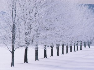 beautiful-photo-examples-of-winter-season-22-2016_05_14-02_02_56-utc