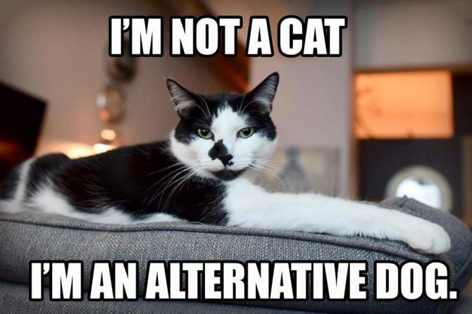 not-cat-alternative-dog