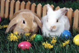Ostara bunnies (2016_05_14 02_02_56 UTC)