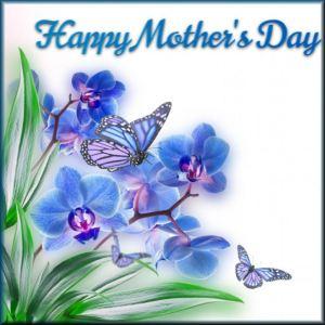 Mothers Day (2016_05_14 02_02_56 UTC)
